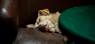 fikret-ahmeti-sleeping-dog